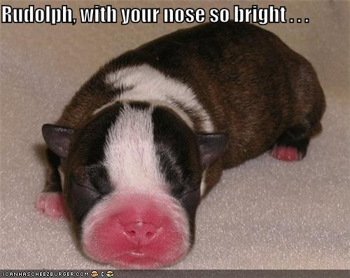 Rudolph With Your Nose So Bright Cheezburger Funny Memes Funny Pictures