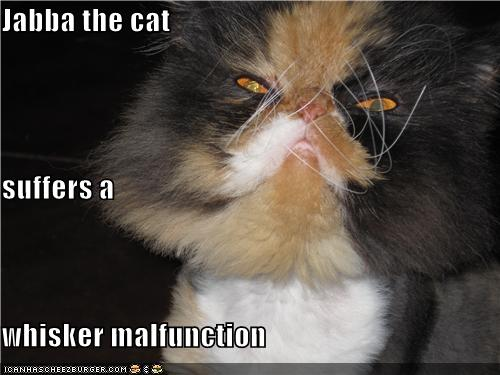 Jabba The Cat Suffers A Whisker Malfunction Cheezburger