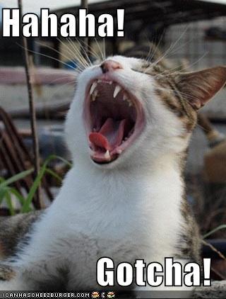 Hahaha! Gotcha! - Cheezburger - Funny Memes | Funny Pictures