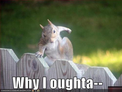 Why I Oughta Cheezburger Funny Memes Funny Pictures