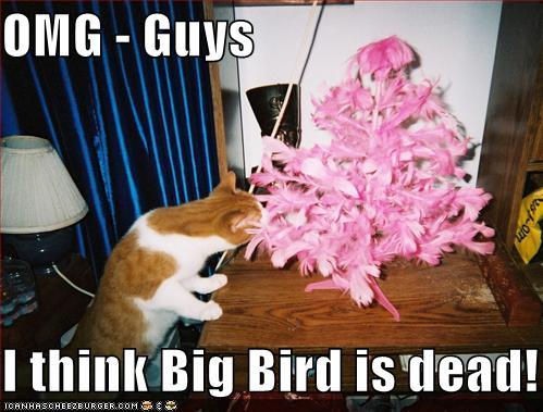 Omg Guys I Think Big Bird Is Dead Cheezburger Funny