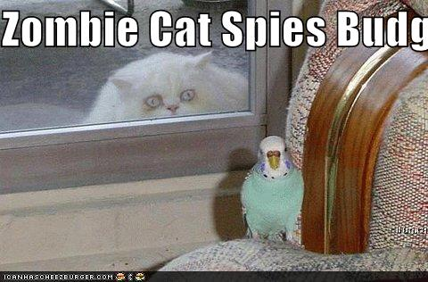 Zombie Cat Spies Budgie Cheezburger Funny Memes
