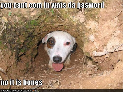 be130766da77c you cant com in wats da pasword no it is bones - I Has A Hotdog - Dog  Pictures - Funny pictures of dogs - Dog Memes - Puppy pictures - doge