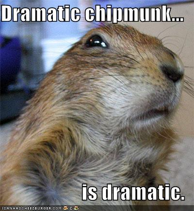 Dramatic chipmunk    is dramatic  - Cheezburger - Funny