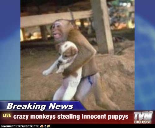 breaking news meme gif