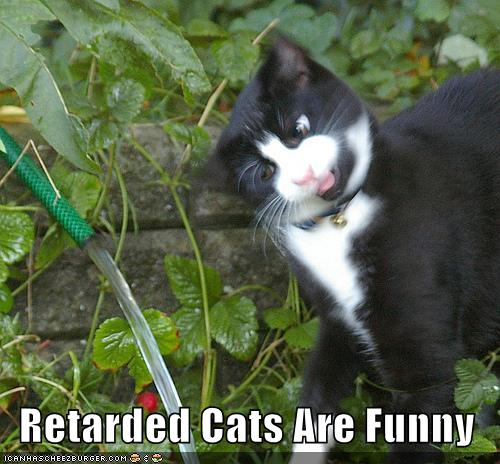 Free Dating Sites >> Retarded Cats Are Funny - Cheezburger - Funny Memes | Funny Pictures