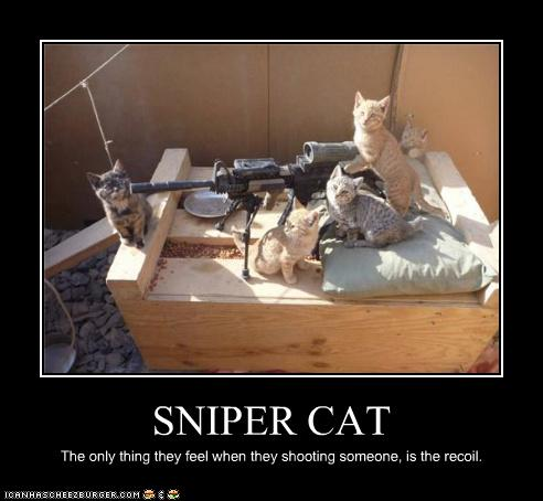 sniper cat cheezburger funny memes funny pictures