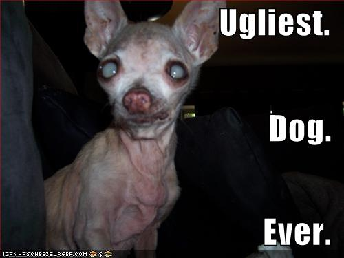 Pin on my laugh for the day |What Ugly Dog Meme