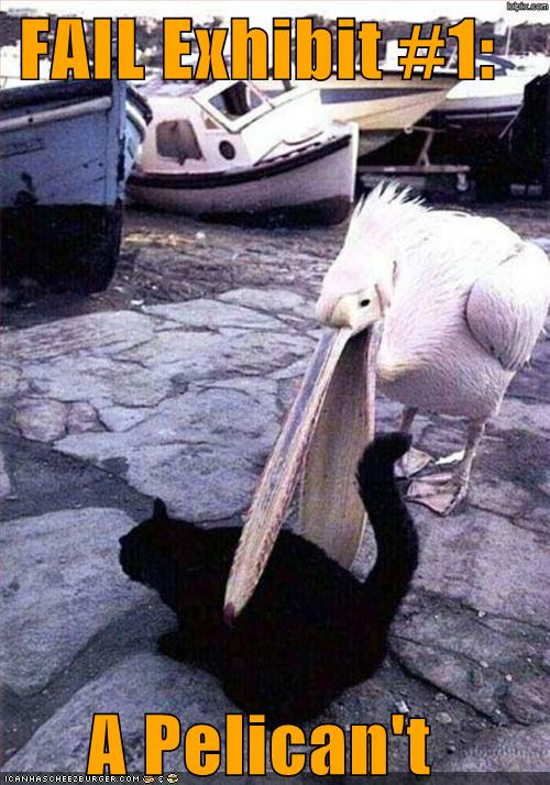 Пеликан — какой-то человек вас очень любит, грустит о вас, но молчит об этом.