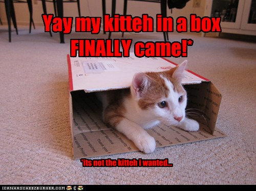 Yay My Kitteh In A Box Finally Came Cheezburger Funny Memes Funny Pictures Read yay finally an update! cheezburger