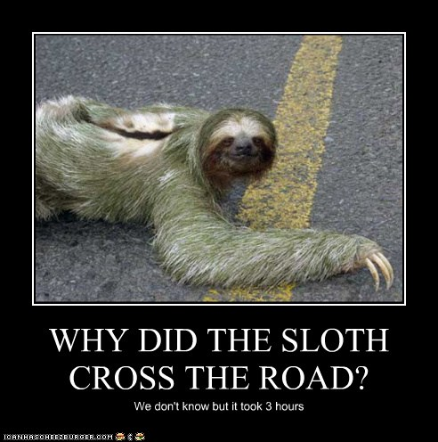 WHY DID THE SLOTH CROSS THE ROAD? - Cheezburger - Funny ...