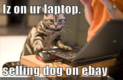 Iz On Ur Laptop Selling Dog On Ebay Cheezburger Funny Memes Funny Pictures