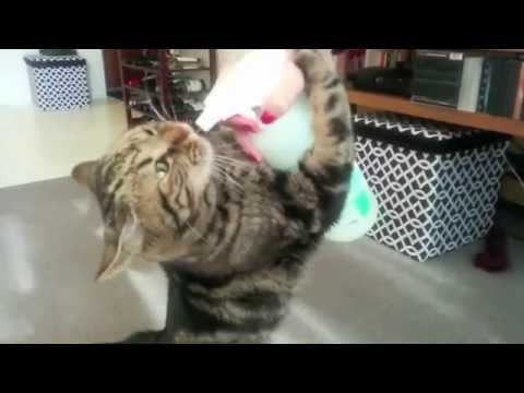 For Joey the Cat, the Spray Bottle is a Reward!