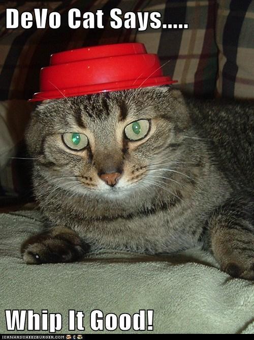 Devo Cat Says Whip It Good I Can Has Cheezburger