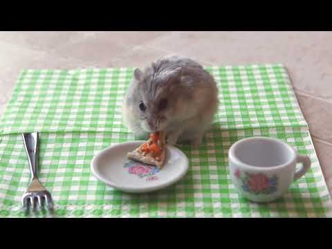 Do You Think You Like Pizza? Not as Much as This Hamster!