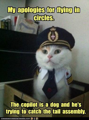 Animal Memes Captain Kitteh I Thought It Was Just A