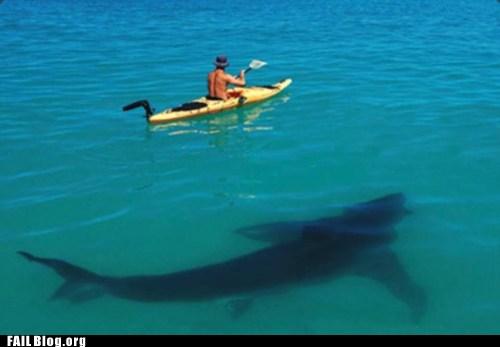 нападение акулы на лодку в апреле 2013