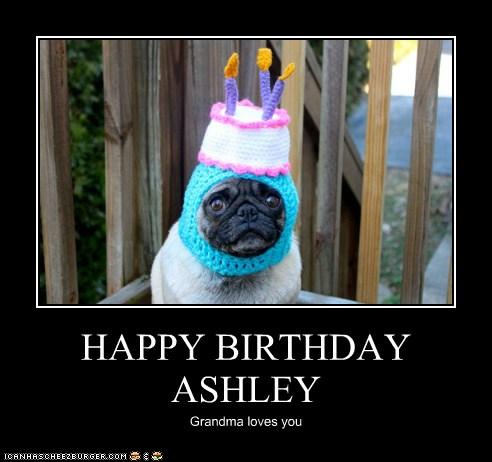happy birthday ashley i has a hotdog dog pictures