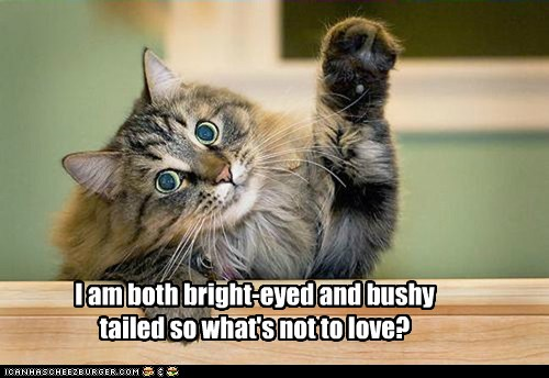 Free Dating Sites >> I am both bright-eyed and bushy tailed so what's not to love? - Cheezburger - Funny Memes ...