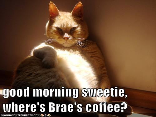 Good Morning Sweetie Where S Brae S Coffee Lolcats