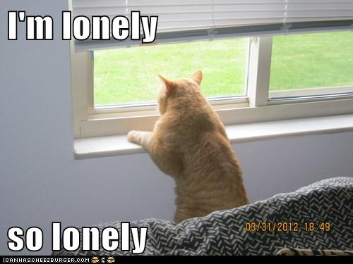 I M Lonely So Lonely Cheezburger Funny Memes Funny