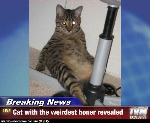 Breaking News Cat With The Weirdest Boner Revealed