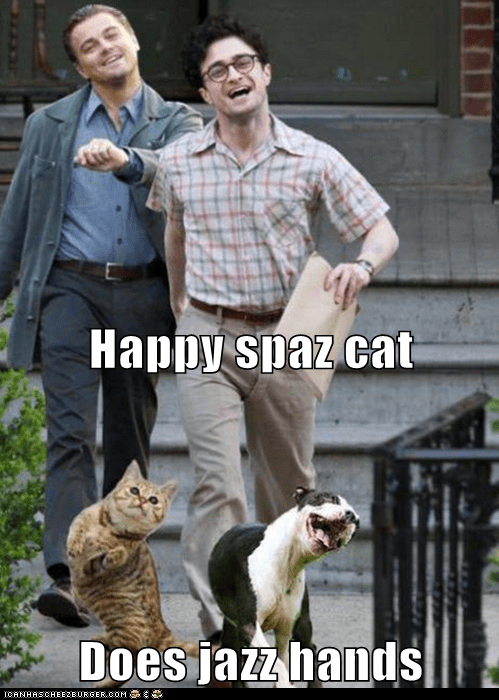 Happy Spaz Cat Does Jazz Hands Lolcats Lol Cat Memes