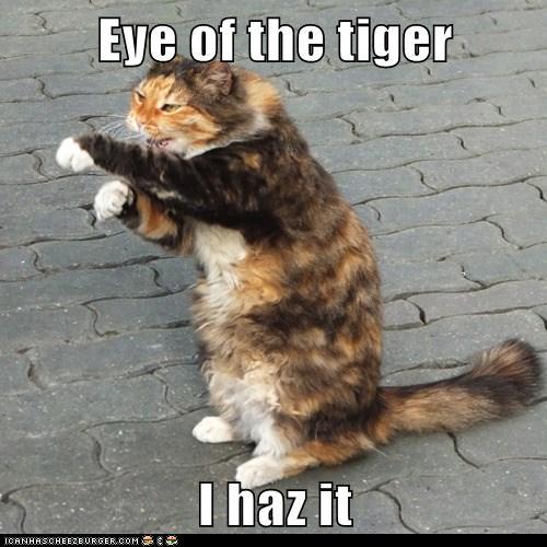 Eye Of The Tiger I Haz It Lolcats Lol Cat Memes