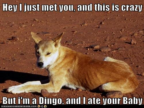 Hey I Just Met You And This Is Crazy But I M A Dingo And