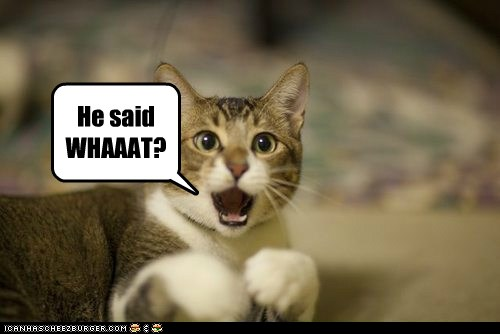 He said WHAAAT? - Lolcats - lol | cat memes | funny cats | funny ...