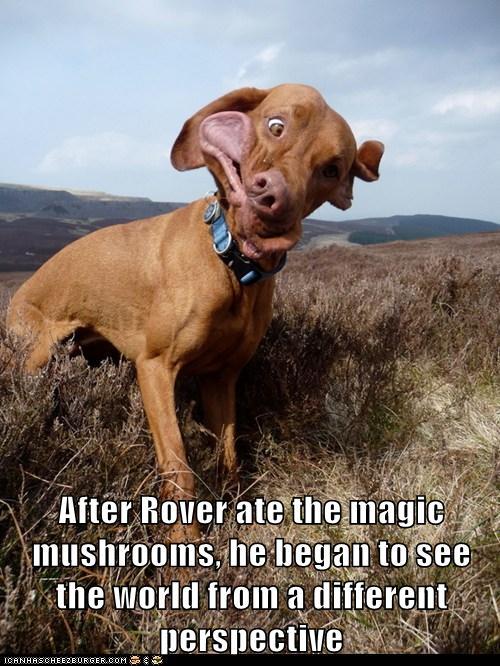 Magic Mushrooms - I Has A Hotdog - Dog Pictures - Funny ...