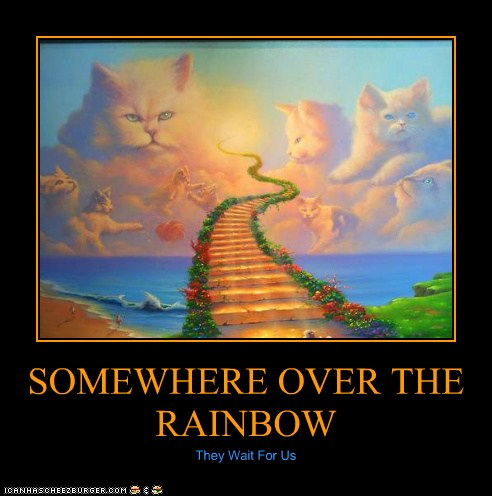 Somewhere Over The Rainbow Lolcats Lol Cat Memes