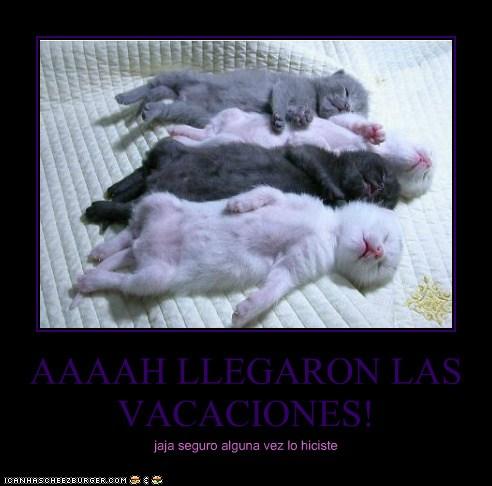 Aaaah Llegaron Las Vacaciones Lolcats Lol Cat Memes