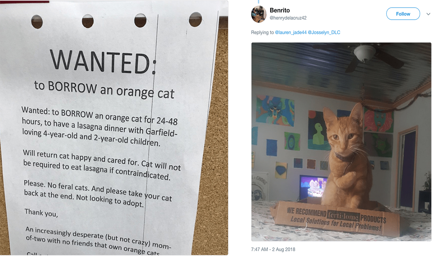 Woman Seeks To Rent Garfield Look Alike Cat For A Lasagna Dinner With Her Kids I Can Has Cheezburger
