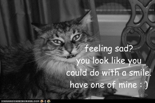 Feeling Sad Lolcats Lol Cat Memes Funny Cats