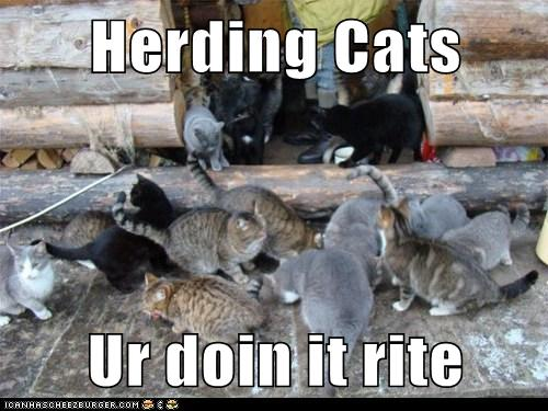 Herding Cats Ur Doin It Rite Lolcats Lol Cat Memes