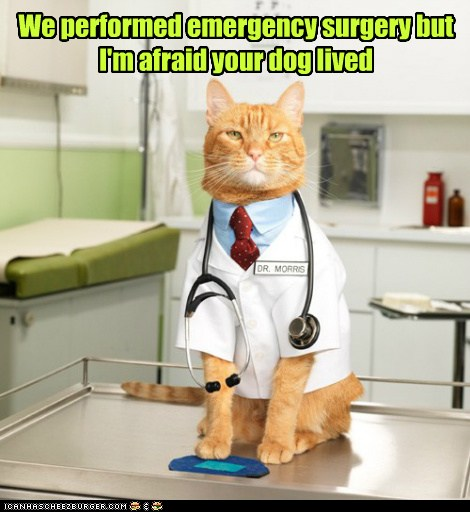 We performed emergency surgery - Lolcats - lol | cat memes ...