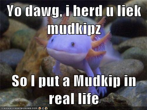 Yo Dawg I Herd U Liek Mudkipz So I Put A Mudkip In Real Life