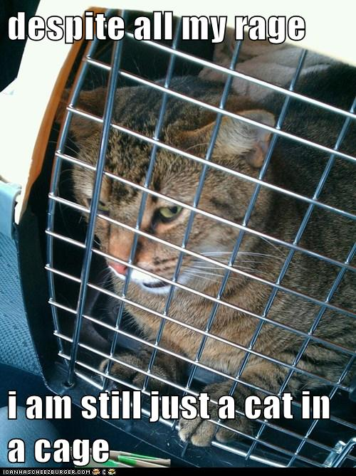 Despite All My Rage I Am Still Just A Cat In A Cage Cheezburger Funny Memes Funny Pictures Limit my search to r/twobestfriendsplay. cheezburger