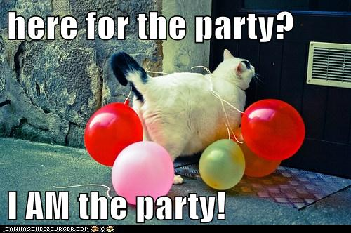 Here For The Party I Am The Party Lolcats Lol Cat Memes