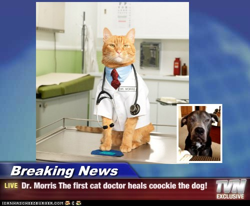 Breaking News Dr Morris The First Cat Doctor Heals