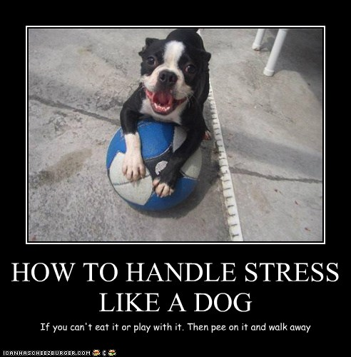 How To Handle Stress Like A Dog I Has A Hotdog Dog