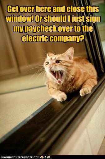 Cranky Cat Channels My Dad Lolcats Lol Cat Memes