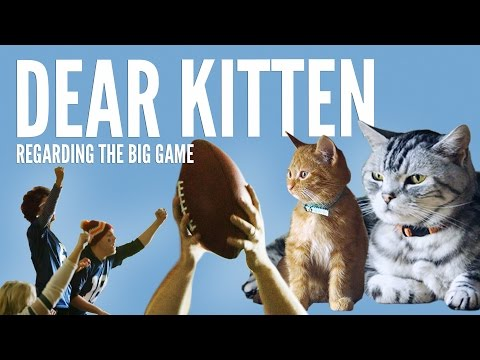 Cat Teaches Kitten the Game Plan for the Superbowl