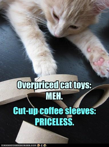 Congratulations You Have A Normal Cat Lolcats Lol