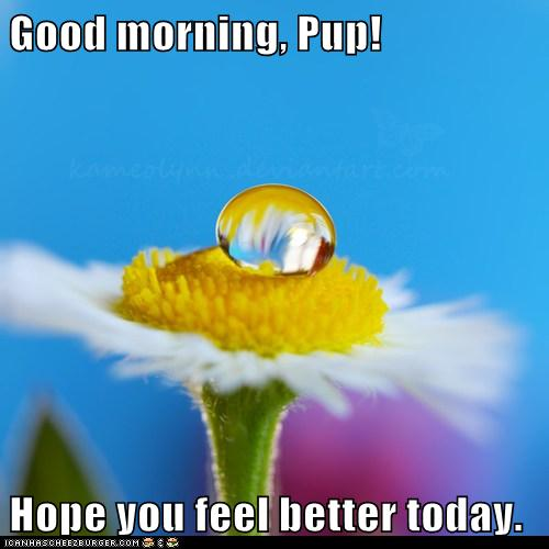 Good morning, Pup! Hope you feel better today