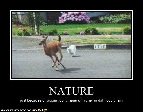 Animal Comedy Bigger Animal Comedy Animal Comedy Funny