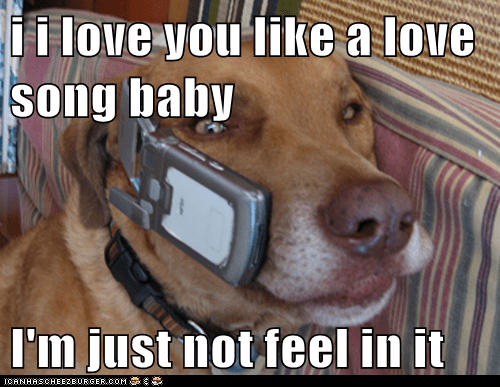 I I Love You Like A Love Song Baby I M Just Not Feel In It I Has A Hotdog Dog Pictures Funny Pictures Of Dogs Dog Memes Puppy Pictures Doge