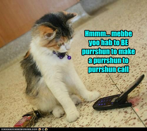 Lolcats Phone Page 2 Lol At Funny Cat Memes Funny Cat Pictures With Words On Them Lol Cat Memes Funny Cats Funny Cat Pictures