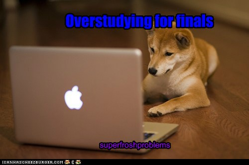 Overstudying For Finals I Has A Hotdog Dog Pictures Funny Pictures Of Dogs Dog Memes Puppy Pictures Doge